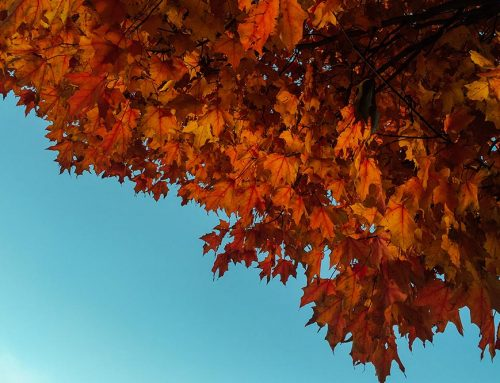 Fall CSA – Late Season Shares