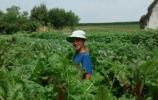 Farm Story 15