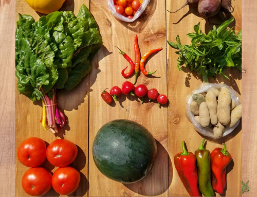 $100 off your Weekly Veggie Box Supscription for CSA Week
